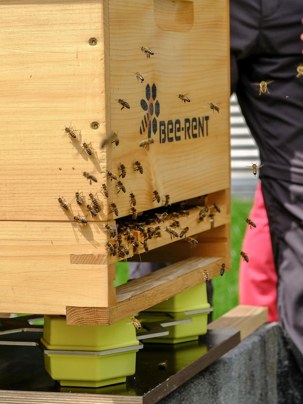 Smart beehives on the campus at Deutsche Telekom's Bonn headquarters.