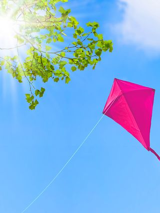 Magenta windbird in the blue sky.